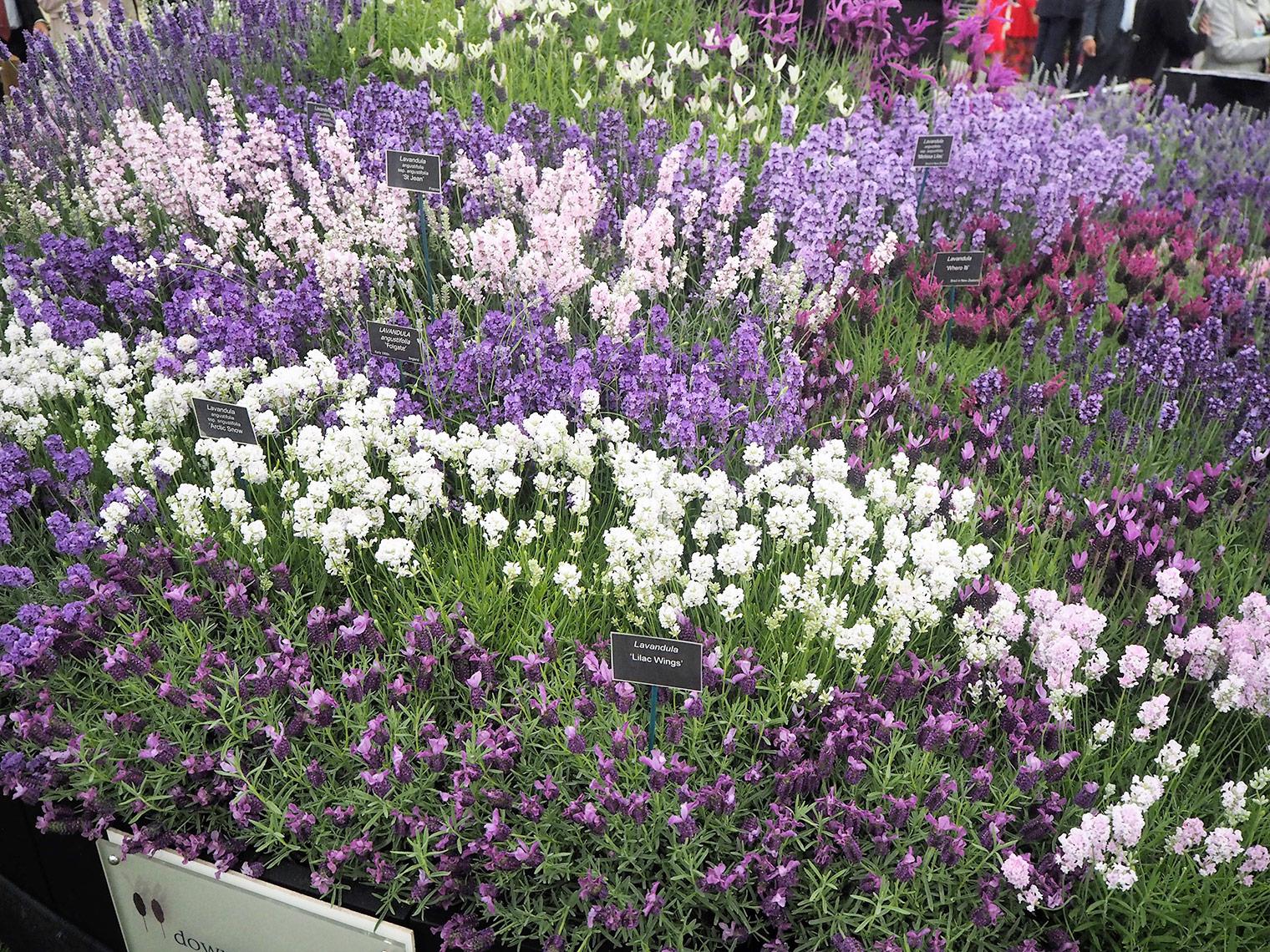 Gardens at Chelsea flower show 2018