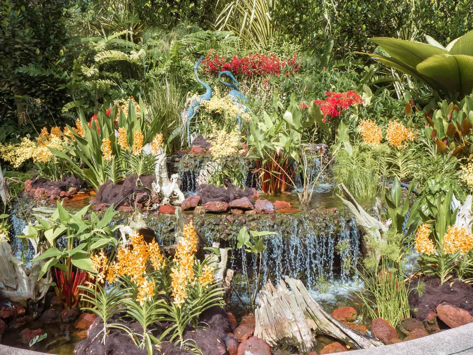 Orchids at Botanical Gardens Singapore